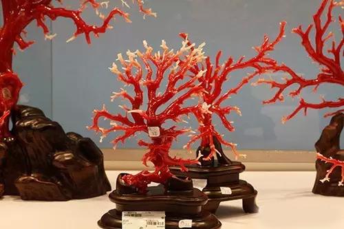 珊瑚年均上涨30%
